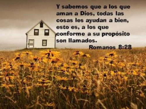 Romanos 8-28