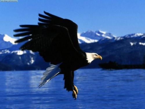 Como el águila-Poema cristiano